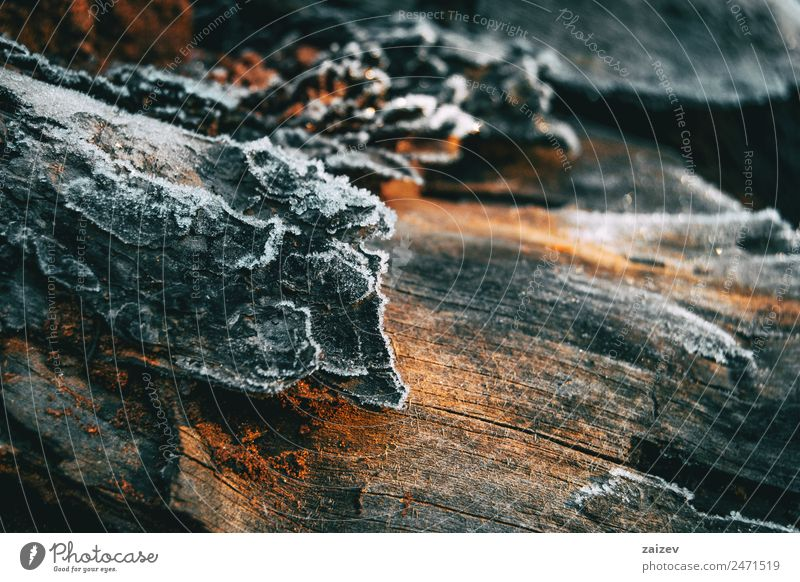 Pieces of tree wood bark covered by a thin layer of snow in sunlight Winter Snow Mountain Garden Wallpaper Nature Plant Autumn Tree Leaf Park Meadow Field