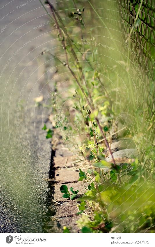 roadside Summer Plant Grass Bushes Street Green Pavement Roadside Paving stone Fence Colour photo Exterior shot Close-up Detail Deserted Copy Space left Day