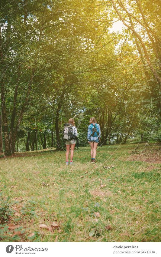 Two women friends with backpacks standing in forest Woman Human being Nature Vacation & Travel Summer Landscape Tree Joy Forest Mountain Adults Lifestyle Autumn