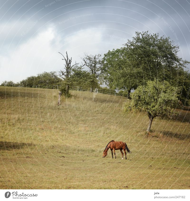 Sky Nature Tree Green Blue Plant Summer Clouds Animal Meadow Landscape Grass Environment Brown Horse Bushes