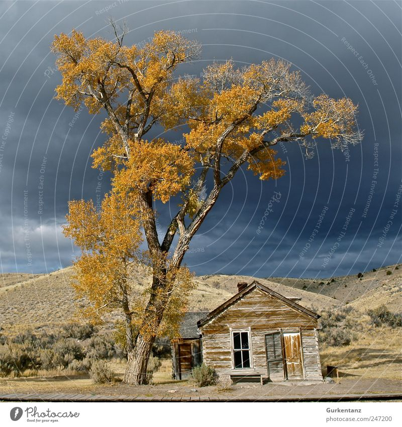 ghost town Storm clouds Sadness Ghost town bannack Bannack State Park Western town Badlands Montana Americas Autumn Indian Summer Yellow Leaf Tree Treetop Hut