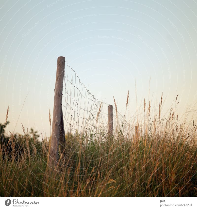 fence Environment Nature Landscape Plant Sky Grass Bushes Natural Blue Brown Green Fence Fence post Colour photo Exterior shot Deserted Copy Space bottom Day