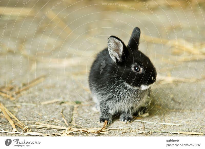 Sky Animal Black Baby animal Brown Friendship Cute Soft Warm-heartedness Protection Pelt Pet Hare & Rabbit & Bunny Safety (feeling of) Cuddly Farm animal