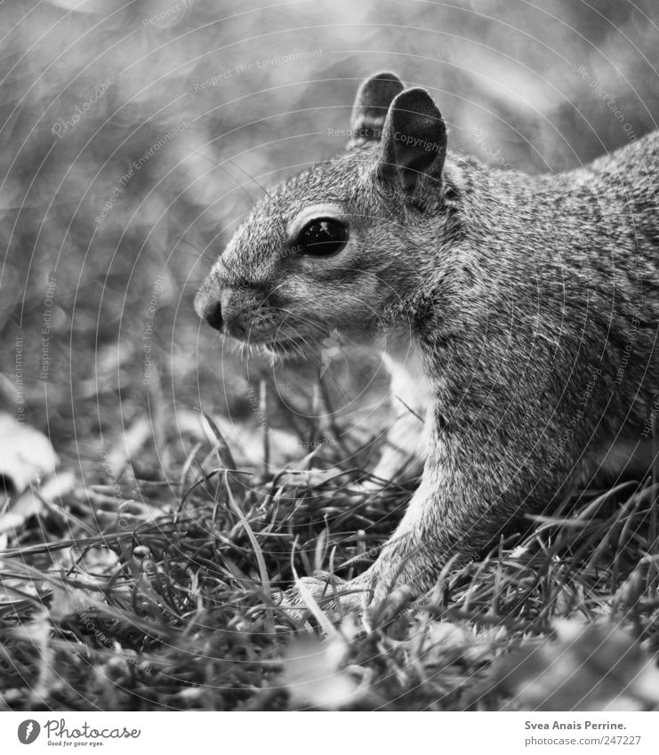 Horn. Garden Park Meadow Animal Wild animal Animal face Pelt Squirrel 1 Exceptional Curiosity Black & white photo Exterior shot Deserted Shallow depth of field