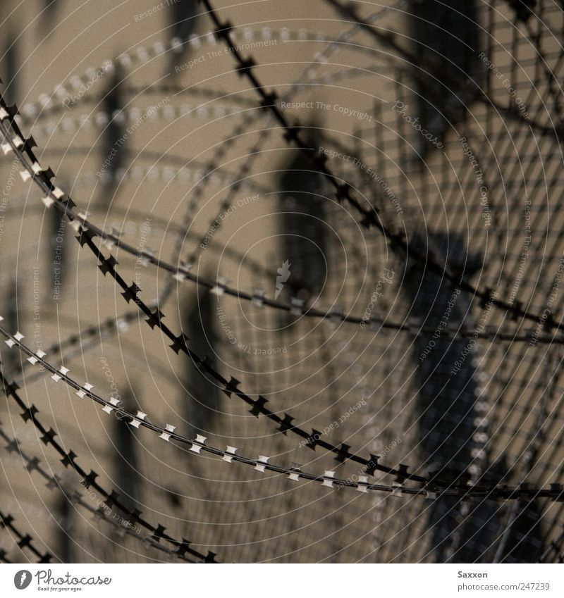 barbed wire Penitentiary Wall (barrier) Wall (building) Fence Grating Monument Metal Line Dark Gloomy Hope Pain Guilty Fear Distress Embitterment Revenge Force