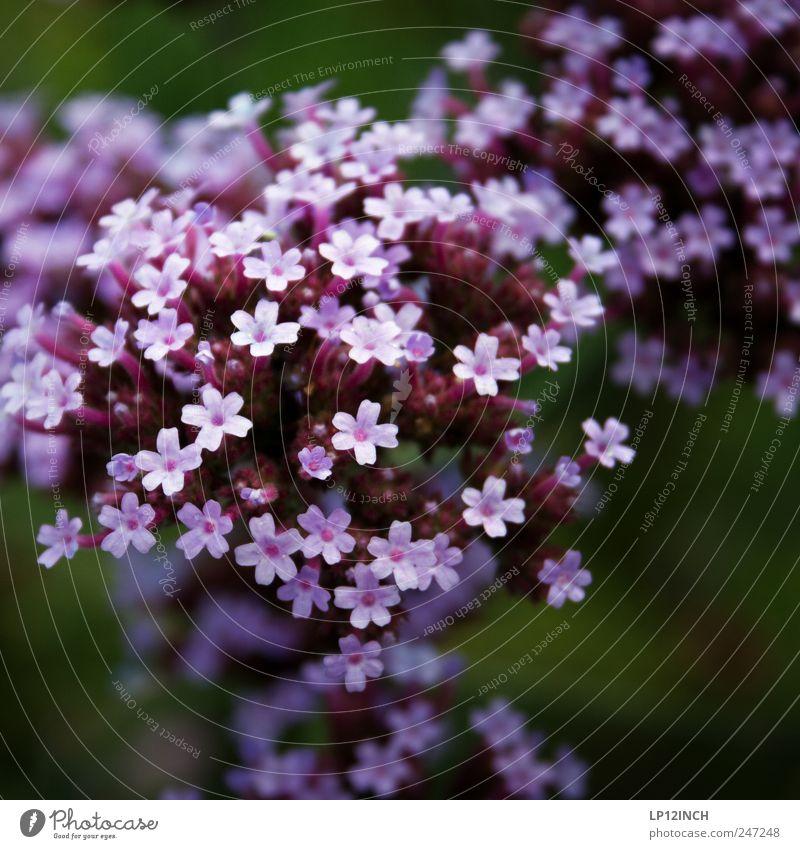 Nature Beautiful Plant Flower Environment Small Garden Park Transience Violet Joie de vivre (Vitality) Joy