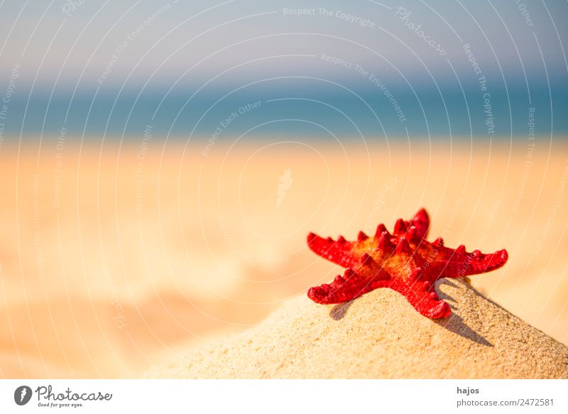 Starfish on a beach Vacation & Travel Summer Beach Sand Tourism Red Sandy beach Ocean Blue Sky Summer vacation primal foliage free travel Colour photo