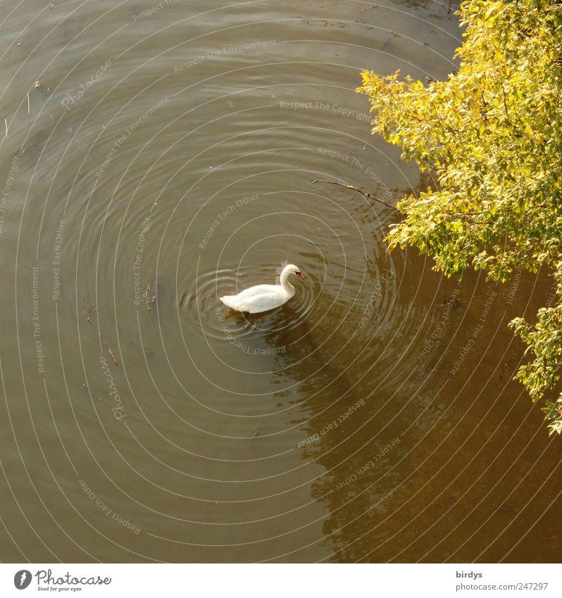 Nature Water White Tree Green Summer Animal Movement Lake Waves Swimming & Bathing Circle Natural Round Peace Idyll