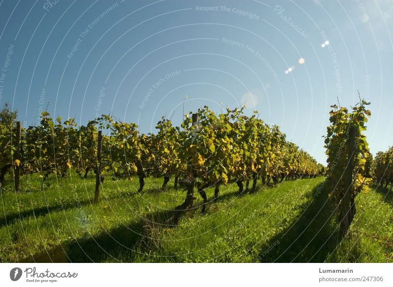 reading landscape Environment Landscape Cloudless sky Autumn Beautiful weather Plant Bushes Agricultural crop Field Long Natural Clean Moody Orderliness