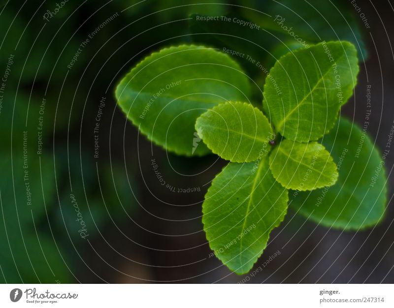 Turned once around itself... Environment Nature Plant Leaf Foliage plant Green Rotate golden spiral Opposite Garden Part of the plant Colour photo