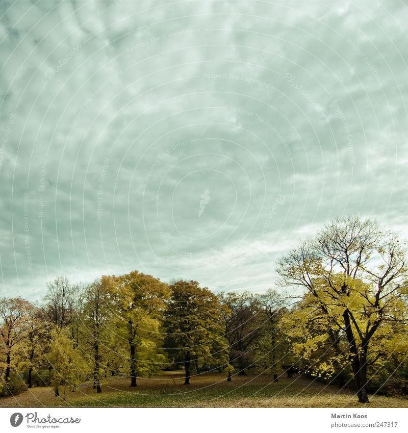 Sky Nature Tree Plant Leaf Clouds Forest Colour Autumn Landscape Park Weather Time Seasons Beautiful weather Bad weather