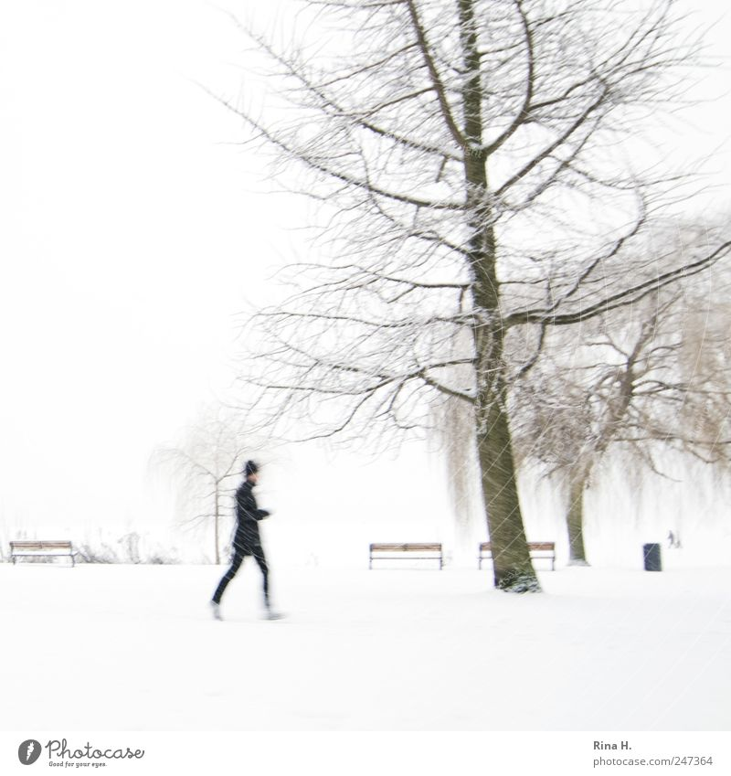 Human being White Tree Cold Sports Snow Landscape Movement Park Bright Leisure and hobbies Walking Lifestyle Fitness Cap Bad weather