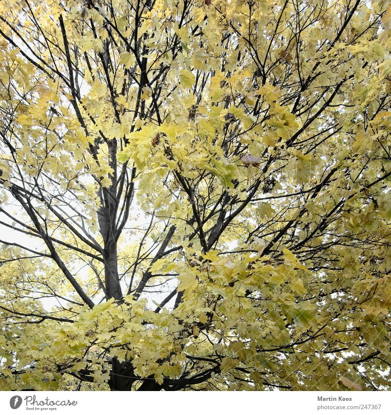 Leaf movement Environment Nature Landscape Plant Autumn Tree Esthetic Design Colour Idyll Climate Pure Growth Change Time Twigs and branches Colour photo