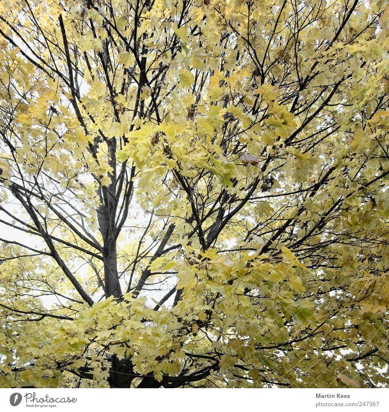 Nature Tree Plant Leaf Colour Autumn Landscape Environment Time Design Esthetic Climate Growth Change Pure Idyll