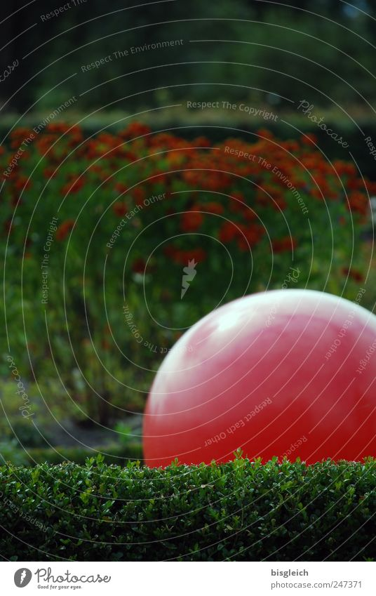 Green Red Calm Relaxation Garden Park Contentment Ball Sphere Serene Meditation Well-being Harmonious Hedge