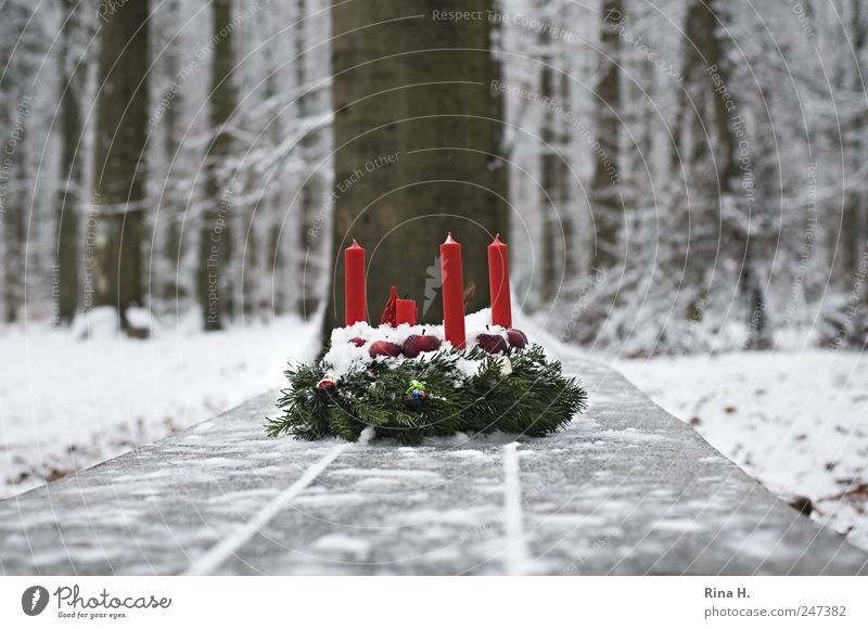 Nature Christmas & Advent White Tree Red Winter Forest Cold Snow Emotions Landscape Religion and faith Ice Natural Frost Candle