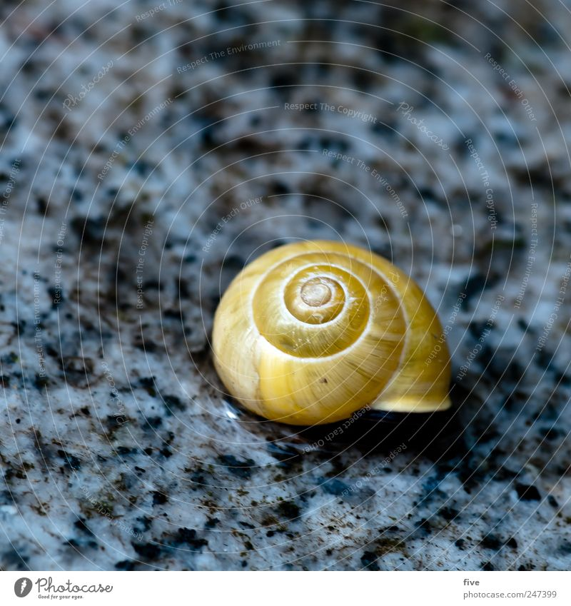 cot Nature Garden Animal Snail Sleep Snail shell Floor covering Paving tiles Circle Colour photo Exterior shot Close-up Detail Macro (Extreme close-up)