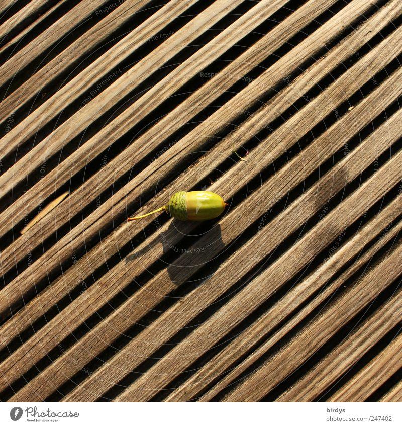 glans Autumn Lie Simple Brown Green Wooden floor Diagonal lines Parallel Middle Acorn 1 Seam Square Fruit Tree fruit Mature Colour photo Subdued colour