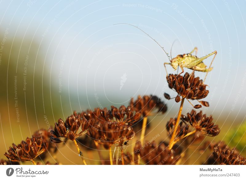 Grasshopper Nature Plant Animal Water Drops of water Sky Sunrise Sunset Summer Climate Blossom Garden Park Field Wild animal Worm 1 Blue Brown Yellow Gold Green