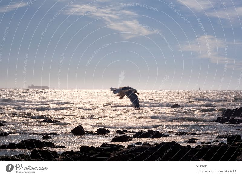 gull Gull birds Freedom Ocean Sand Beach Tide Waves Coast White Energy Movement Story Wing Gliding Wind Flying Light Evening Reflection Mirror Silver