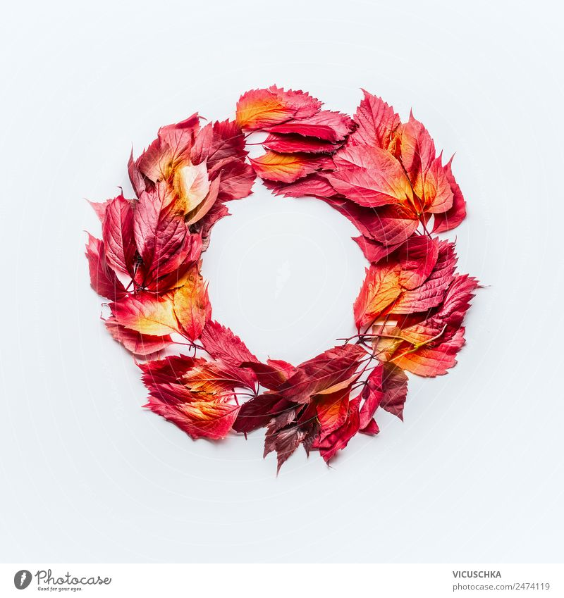Wreath of red autumn leaves on white Style Design Thanksgiving Nature Autumn Leaf Decoration Ornament Yellow Composing Background picture Symbols and metaphors