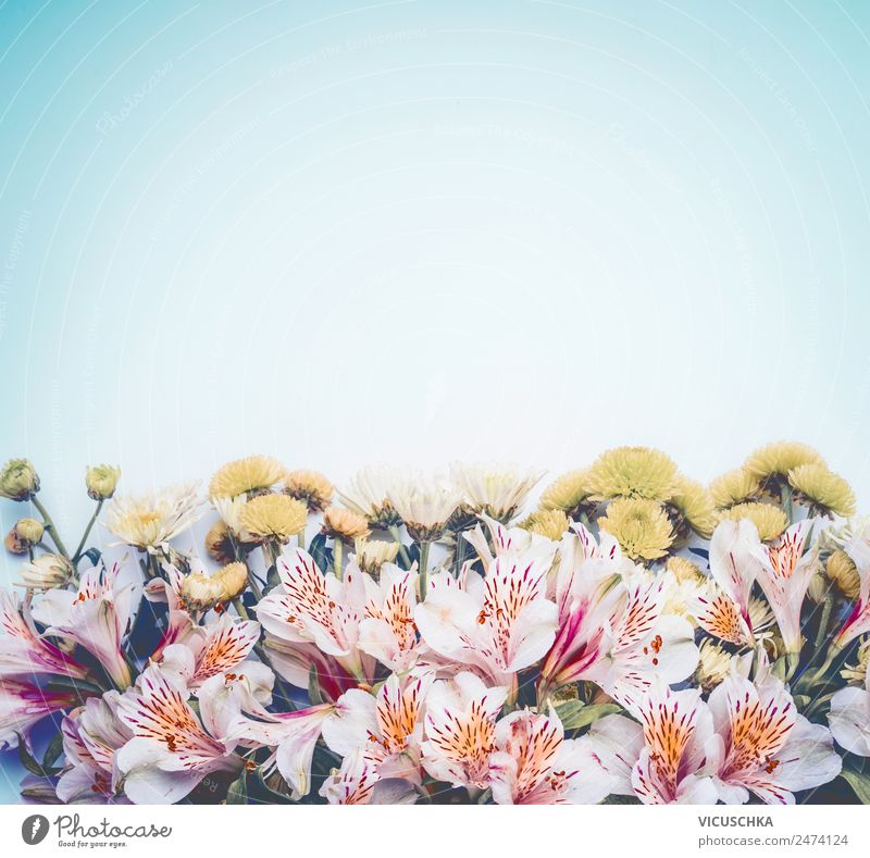 Beautiful background with BLümen on light blue Style Design Summer Nature Plant Spring Flower Leaf Blossom Decoration Bouquet Love Pink Background picture