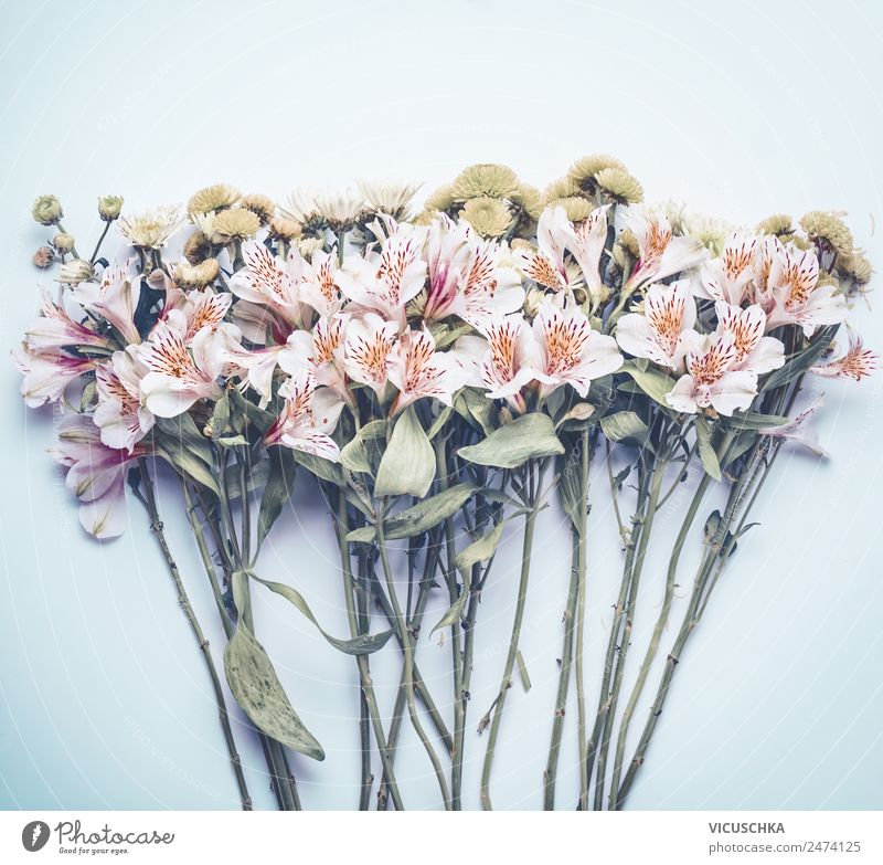 Flowers on pastel blue Style Design Life Summer Garden Decoration Feasts & Celebrations Nature Plant Leaf Blossom Love Pink Background picture Conceptual design