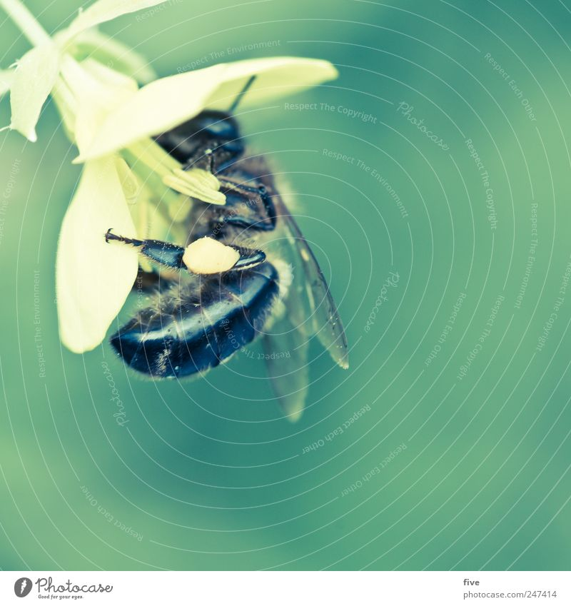 bee Nature Summer Plant Flower Blossom Garden Animal 1 Work and employment Movement Discover Flying Wing Colour photo Exterior shot Close-up Detail