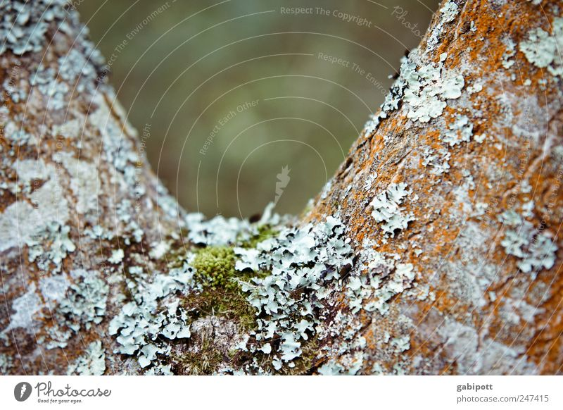 V-neck Nature Plant Tree Lichen Moss Natural Wild Blue Brown Green Tree bark Coated Inhabited Colour photo Exterior shot Structures and shapes Deserted Day