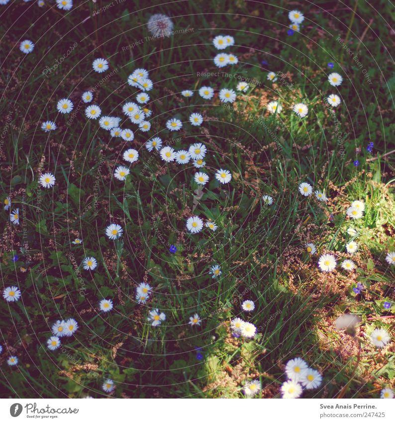 Back then. Environment Nature Plant Flower Grass Dandelion Daisy Garden Meadow Dream Sadness Concern Loneliness Colour photo Subdued colour Exterior shot