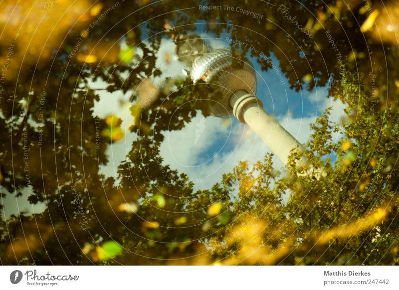 Tree Forest Berlin Landmark Downtown Fairy tale Surrealism Downtown Berlin Puddle Capital city Tourist Attraction Berlin TV Tower Television tower