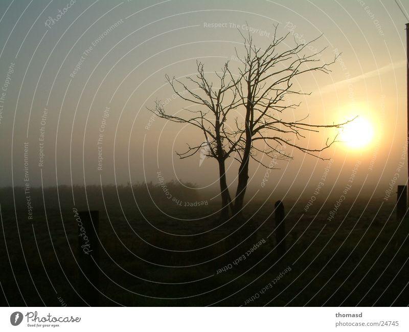 Tree Meadow Fog