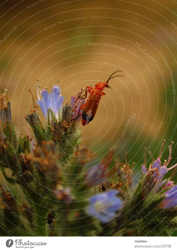 little beetle Flower Animal Small Transport Beetle