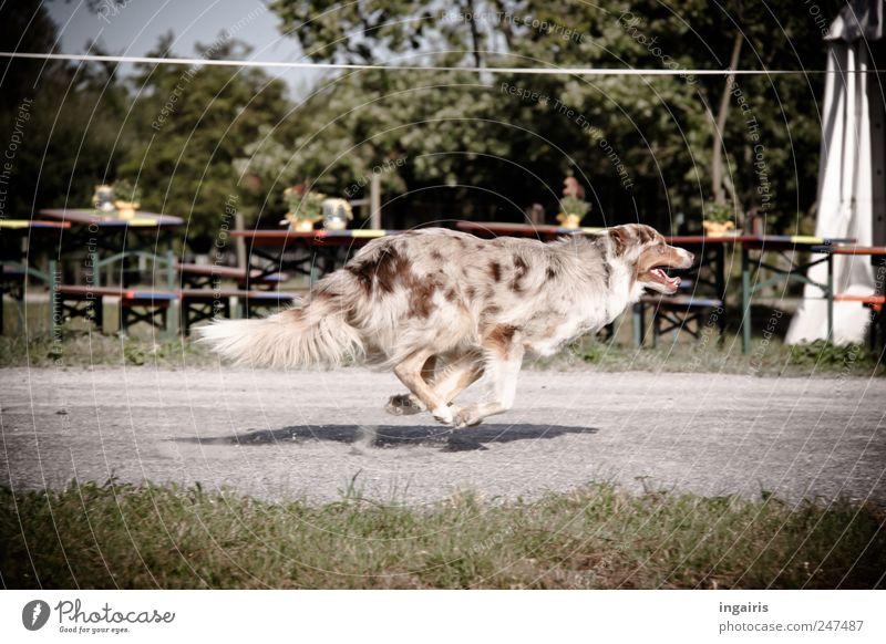 Dog Joy Animal Life Movement Jump Healthy Elegant Walking Free Running Speed Esthetic Hunting Brash Pet