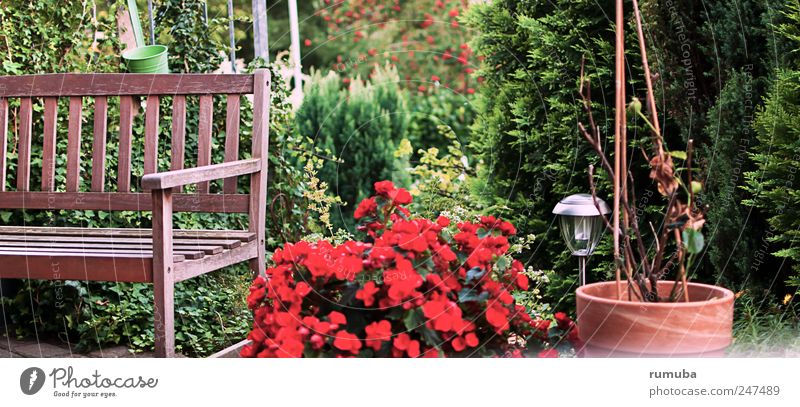 Nature Green Plant Red Summer Relaxation Environment Garden Blossom Brown Leisure and hobbies Bushes Bench Living or residing To enjoy Beautiful weather