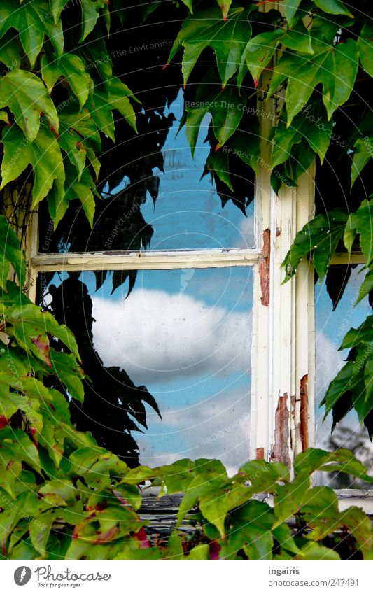 Window to the sky House (Residential Structure) Environment Sky Clouds Ivy Building Facade Old Growth Living or residing Natural Happy Safety Protection Romance