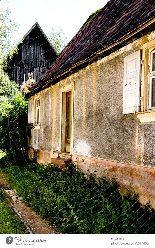 Old Tree Plant Calm Loneliness House (Residential Structure) Wall (building) Window Garden Grass Wall (barrier) Door Facade Stairs Natural Bushes