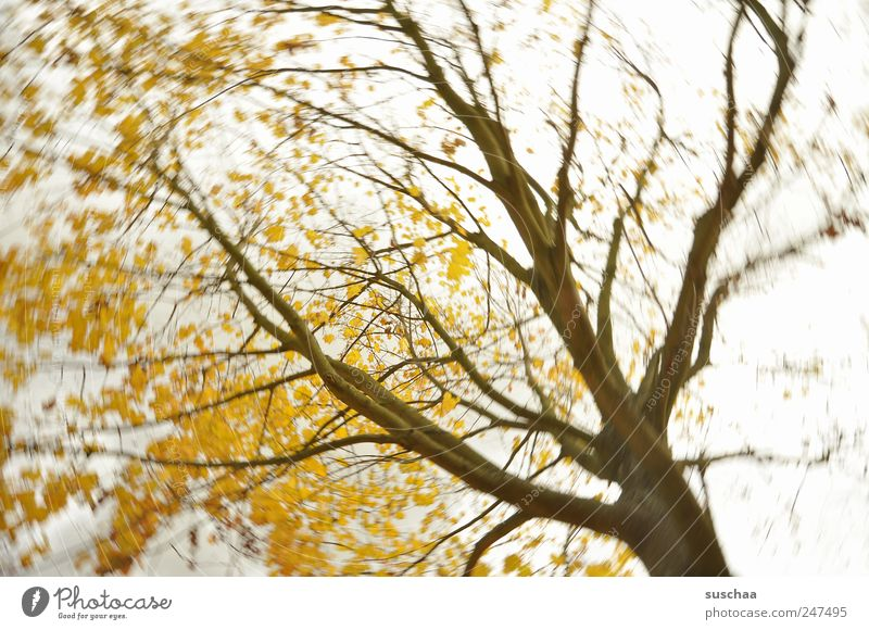 Sky Nature Tree Yellow Autumn Environment Air Park Weather Power Wind Gold Climate Growth Change Gale