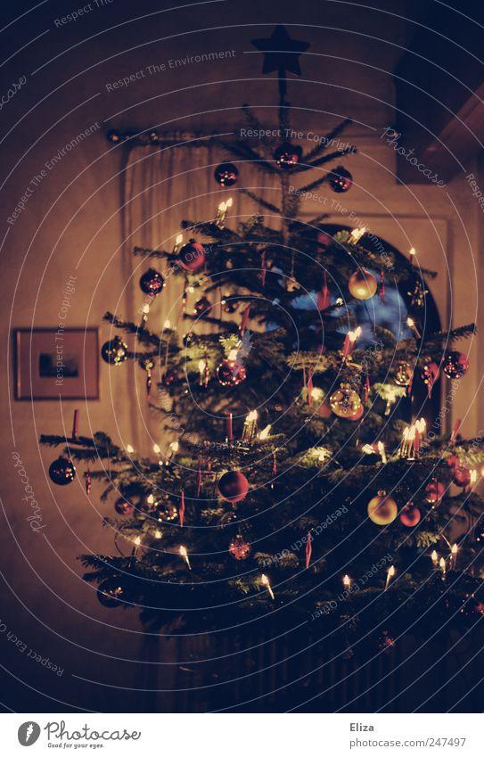 Ooooh duuuuu frööööölicheeeeee... Decoration Living room Feasts & Celebrations Christmas & Advent Tree Together Warm-heartedness Christmas tree fir tree Pensive