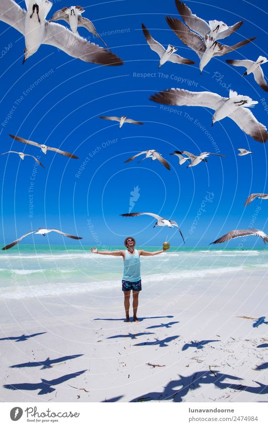 Traveler on the beach surrounded by seagulls Lifestyle Exotic Happy Leisure and hobbies Adventure Freedom Summer Sun Beach Human being Homosexual Man Adults 1
