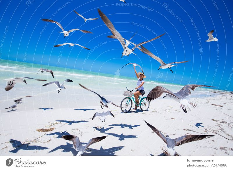 Woman riding a bike on the beach surrounded by seagulls Lifestyle Exotic Joy Leisure and hobbies Sports Cycling Adults 1 Human being 13 - 18 years