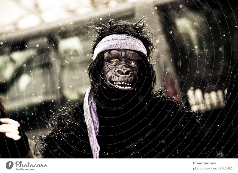 Planet of the Apes Carnival Human being 1 Observe Freeze Exceptional Crazy Joy Carnival costume monkey costume Mask Subdued colour Exterior shot Day Contrast
