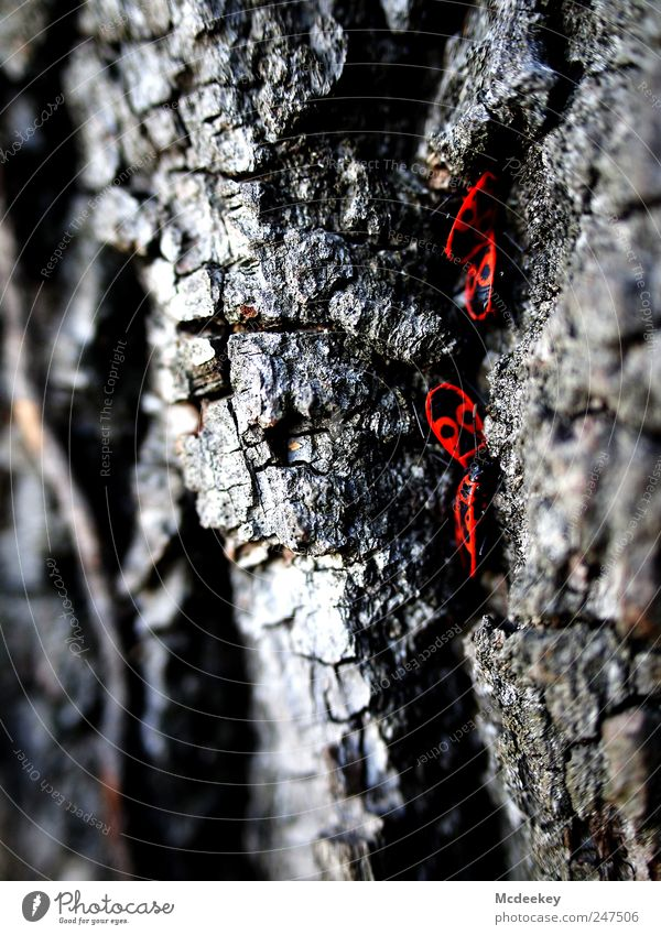 Nature Old White Tree Plant Red Summer Animal Black Gray Park Natural In pairs Wild animal Group of animals Insect