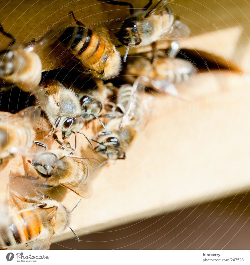 Nature Animal Environment Fear Food Fly Growth Nutrition Group of animals Threat Team Logistics Contact Protection Agriculture Bee