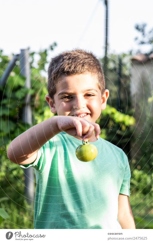Little boy showing a green tomato Child Human being Nature Summer Plant Colour Green Red Leaf Natural Family & Relations Happy Boy (child) Garden Growth Fresh