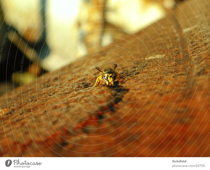 Nature Animal Freedom Rust Attack Wasps