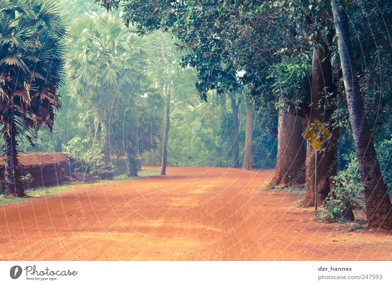 Nature Tree Beautiful Red Plant Forest Street Life Environment Sand Earth Desert Exceptional Fantastic Virgin forest Traffic infrastructure