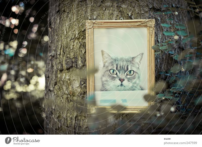 Cat Nature Old Tree Leaf Environment Funny Exceptional Gold Bushes Cool (slang) Image Animal face Tree trunk Hang Animalistic