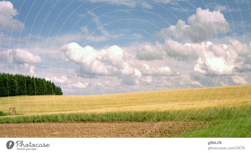 cornfield & sky Sky Clouds Nature Landscape Freedom