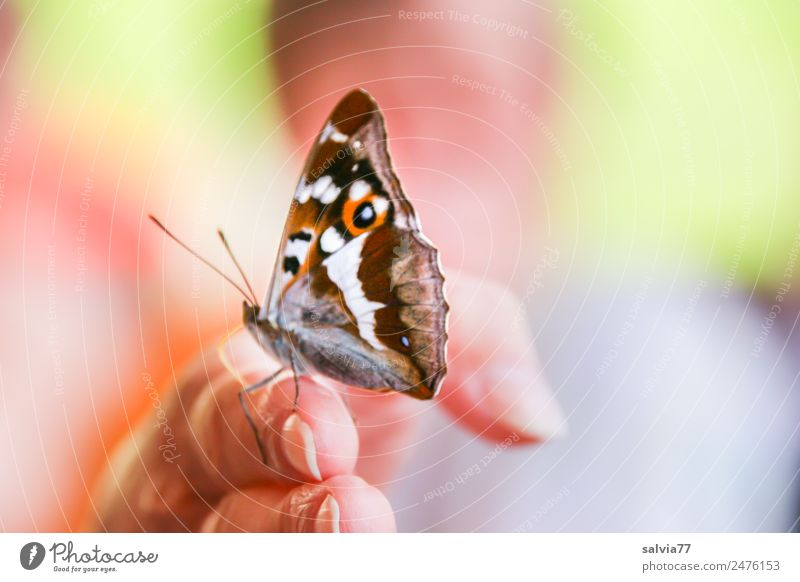 look... Skin Fingers 1 Human being Nature Summer Butterfly Insect iridescent butterfly Animal Brash Near Curiosity Positive Multicoloured Sympathy